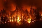Analiz: Çevre Terörizmi ve PKK'nın Orman Sabotajları