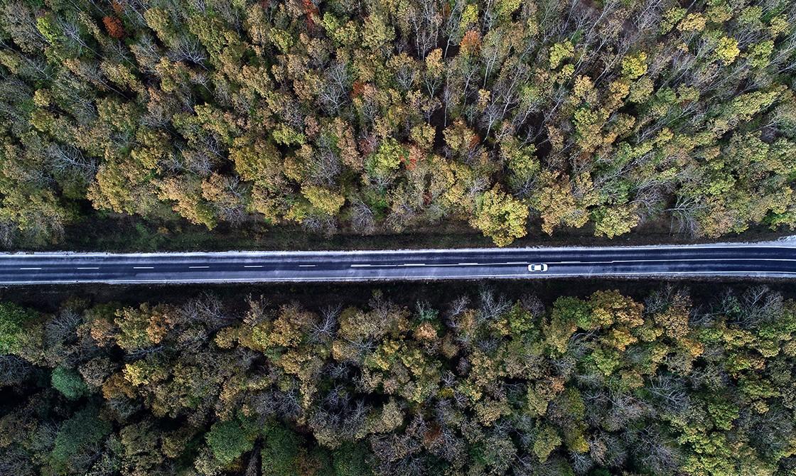Longoz Ormanları, Kırklareli (Fotoğraf: Mehmet Ayduran, AA)