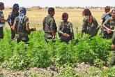 The PYD/PKK's Drug Trafficking & Turkey's War on Narco-Terrorism