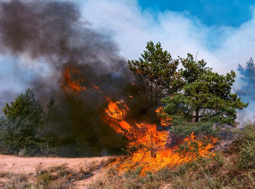 Forest Arson