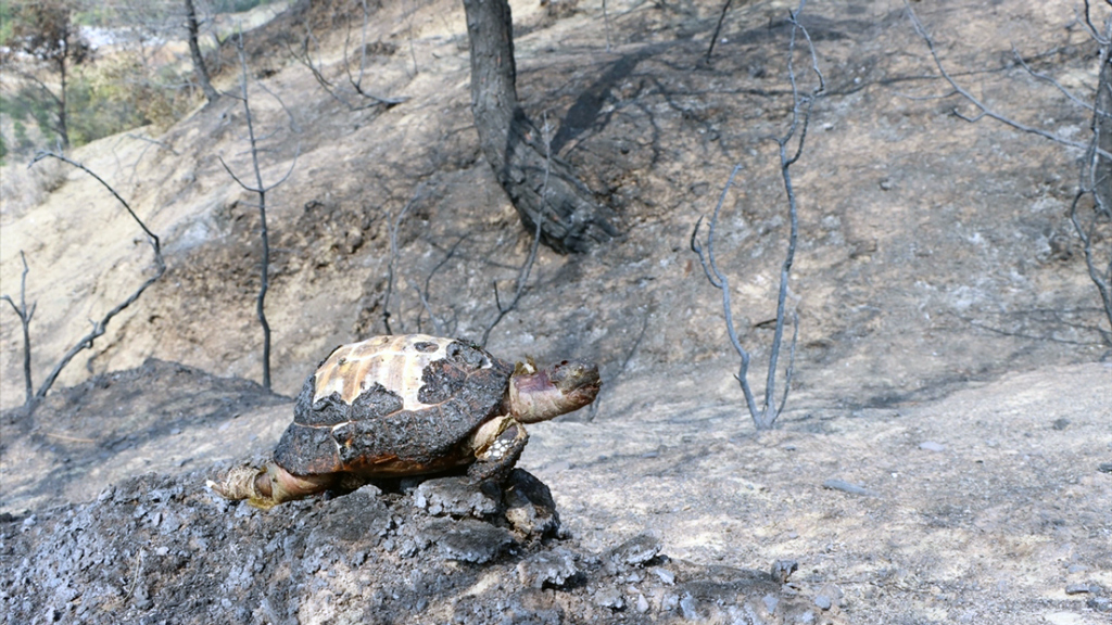Forest fire in Hatay